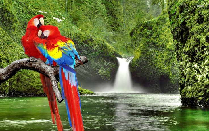 Macaws-listice